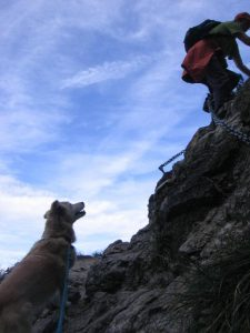 Mit Hund auf dem Klettersteig