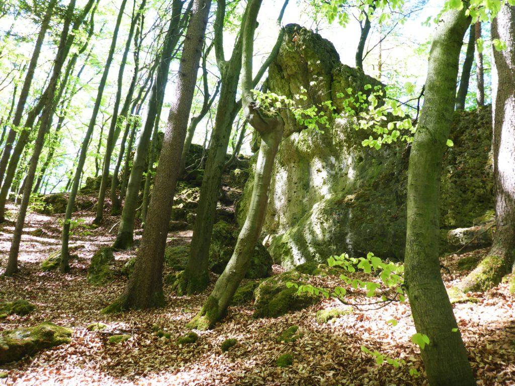 Sonniger Märchenwald in der Fränkischen Schweiz