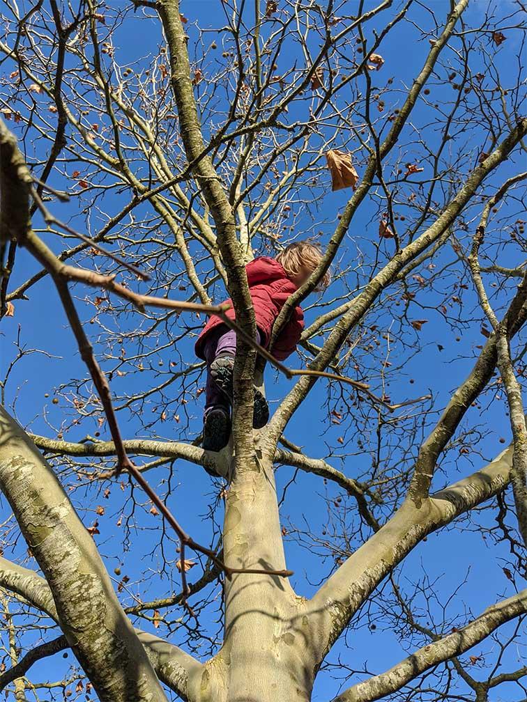 Kind klettert auf Kletterbaum
