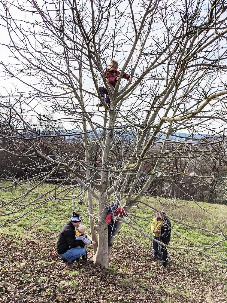 Kinder klettern auf einen Baum