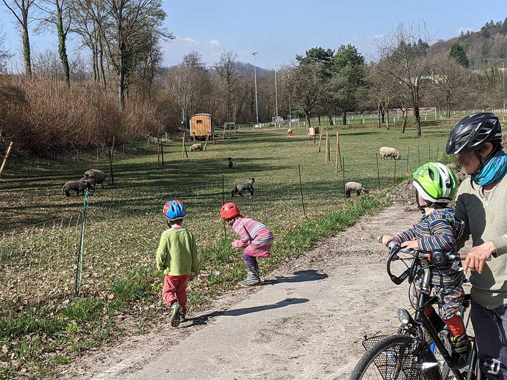 Schafe gucken bei der Kinder-Radtour