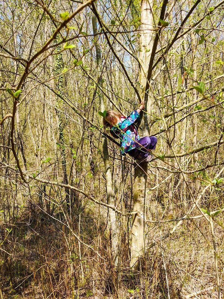 Kind beim Klettern im Baum