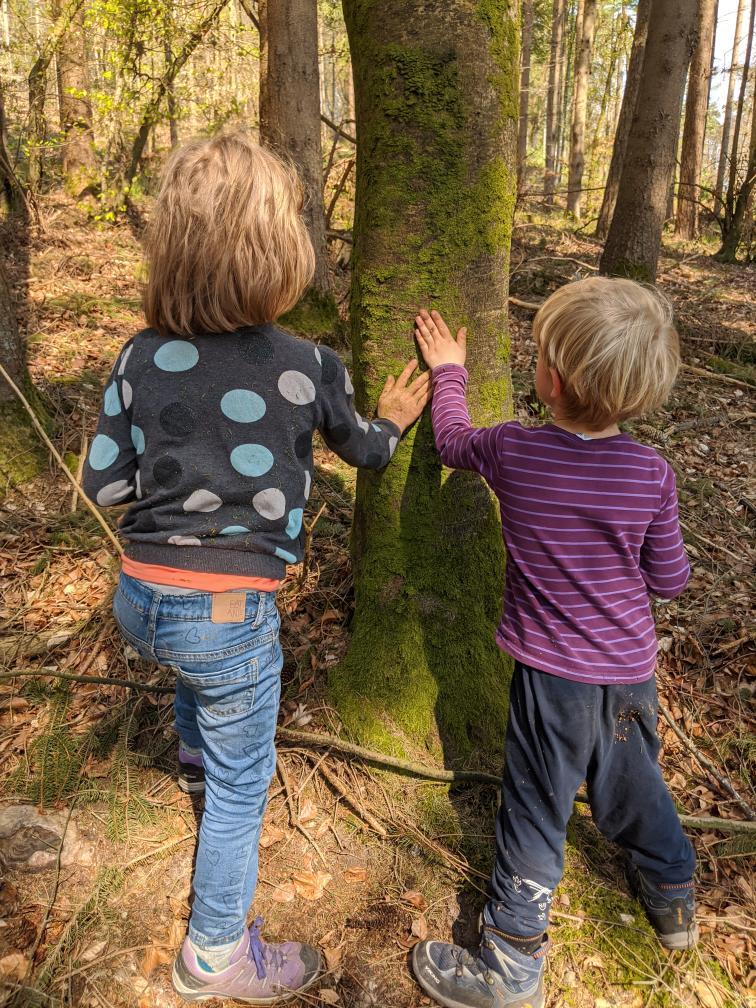 Moos am Baumstamm wird von Kindern untersucht