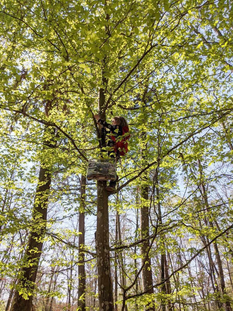 Manche Osternester sind ziemlich weit oben, Baumklettern erforderlich