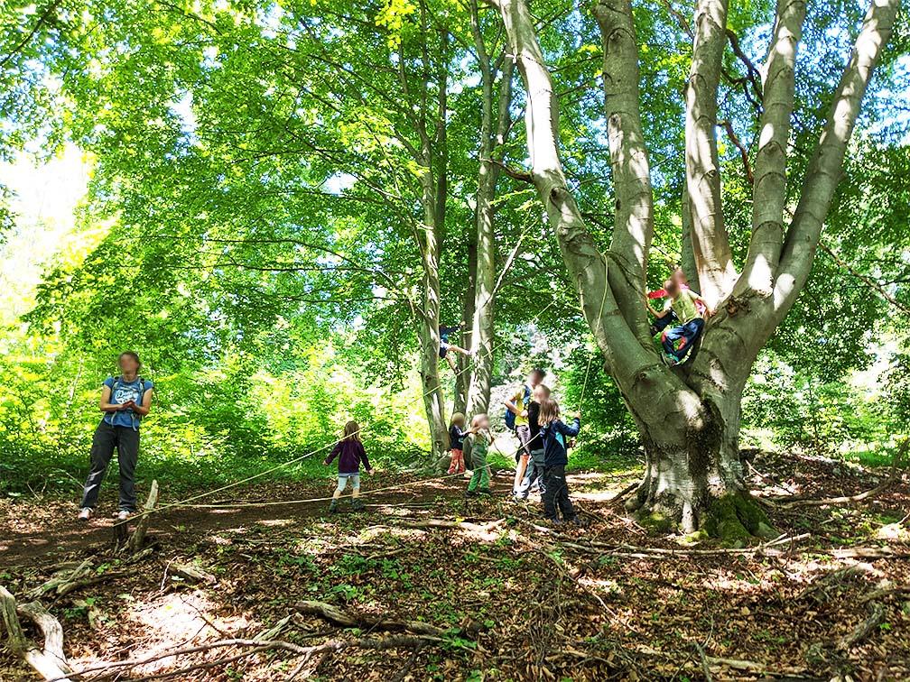 Kinder beim Baumklettern