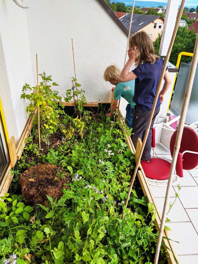 Kinder entdecken begeistert das Hochbeet auf dem Balkon